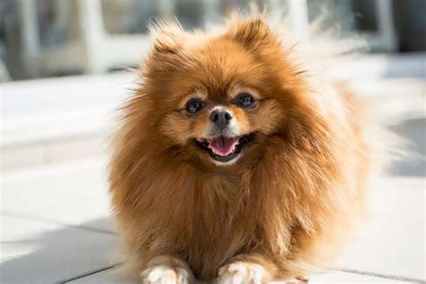 Top 10 Popular Small Dog Breeds
