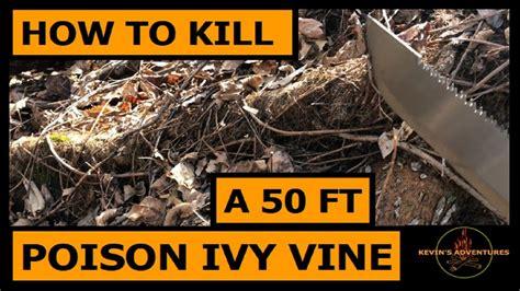 how to kill poison oak how to kill poison ivy a 50 vine youtube