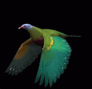 Imágenes con Gifs de pájaros (Pájaros volando) para WhatsApp: Imágenes en movimiento de aves