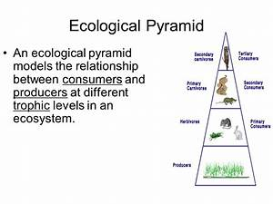 Ecological Relationship