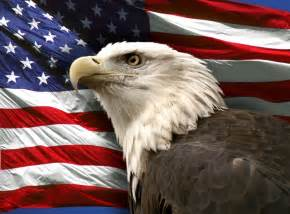 Bald Eagle with American Flag as Wallpaper