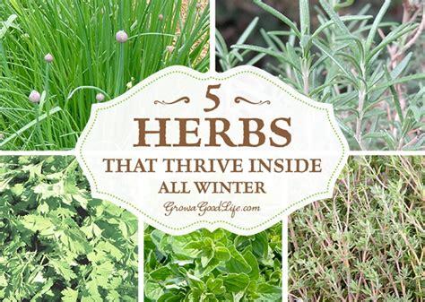 Growing Herbs Inside by Grow Herbs Indoors 5 Herbs That Thrive Inside