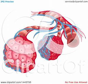 Clipart Of A Medical Diagram Of A Disease  Cancer In The