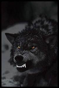 Prowling In The Dark, Ferocious Wolf - PopArtUK