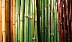 Bambus Pflege In Der Vase : aktuelles von hier erfahren sie alles ber ~ Lizthompson.info Haus und Dekorationen
