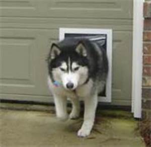 All pet doors pet door models of every manufacturer for Dog door for garage door