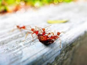 Ameisen Im Haus Woher : die besten und effektivsten hausmittel gegen ameisen in ~ Lizthompson.info Haus und Dekorationen