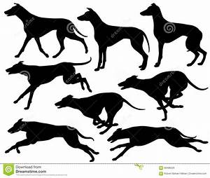 Greyhound dog silhouettes stock vector. Illustration of ...