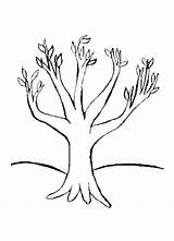 Tree Coloring Bare Colouring Leaves Pages Without Popular sketch template