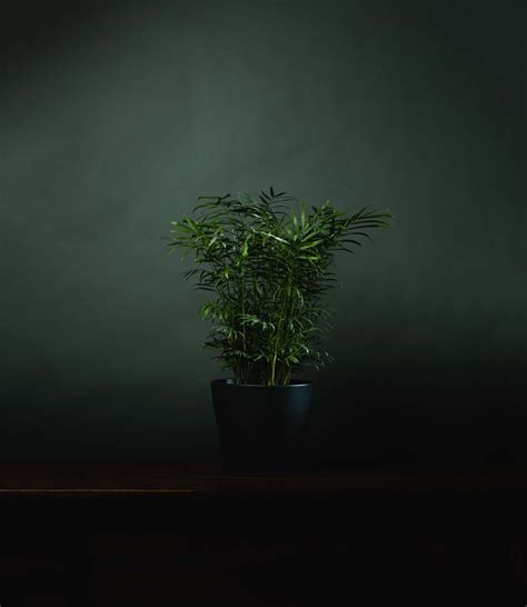 Thinking About Modern Indoor Plants