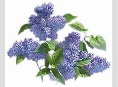 clipartflowerslilac