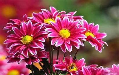 Flowers Background Wallpapers Pc Pink Flower Desktop