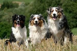 Hunde Größe Berechnen : die beliebtesten hunderassen die top 10 ~ Themetempest.com Abrechnung