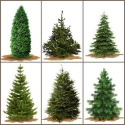 a useful guide to the right tree