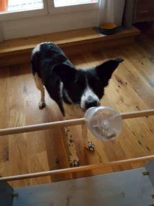 hundespielzeug selber bauen intelligenzspielzeug flaschen hundespielzeug selbst machen