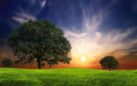 Wallpaper Jpg by Grass Field Trees Sun Sky Wallpapers Grass Field Trees