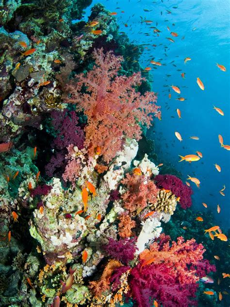 coral reefs national geographic society