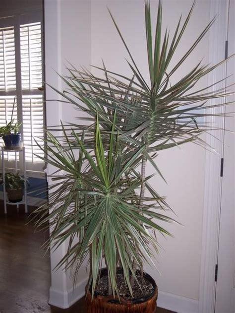 green home decor  cleans  air top eco friendly