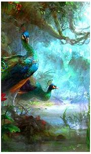 Peacock HD Wallpapers