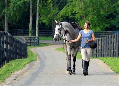 Horse Second Thehorse Racehorses Careers Study Racehorse