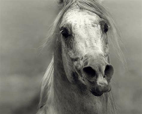 wojtek kwiatkowski horse photographer photographies
