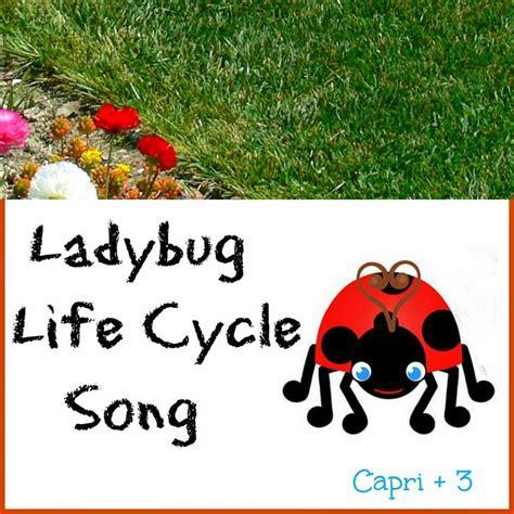 125 best ladybug unit images on ladybugs 304 | b886a424bd0e6d93fbc808cbace5bdb9 insect activities preschool songs