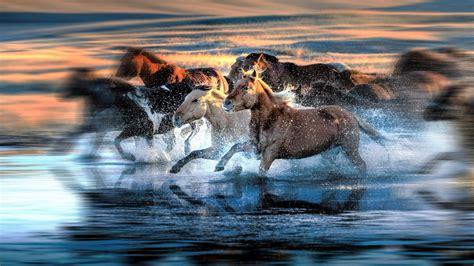 Water Animal Wallpaper - motion blur water running animals wallpapers hd