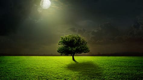 wallpaper moon light full moon tree landscape