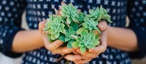 5 Plantes D U0026 39 Int U00e9rieur Increvables Pour Jardiniers
