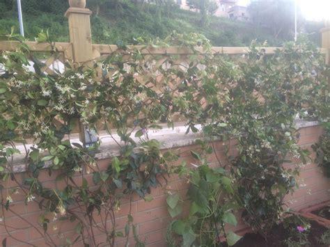 siepe per terrazzo la finestra di stefania siepe come fare una terrazza con