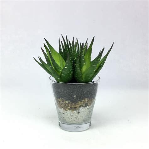 พืชปลอม ว่านหางจระเข้ปลอม ต้นไม้ปลอมพร้อมแก้ว ประดับด้วย ...