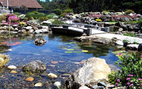 top  pond problems  solutions sweetwater landscape