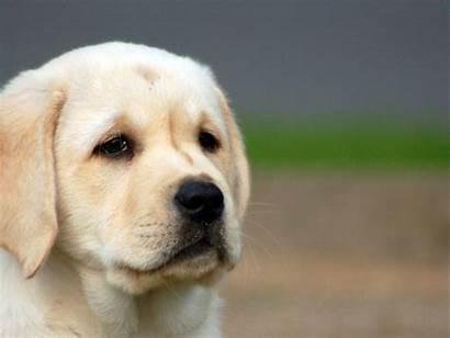 Puppy Sad Dog Backgrounds Looks Background Pixelstalk