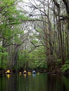 Celebrating Congaree National Park and the Congaree River ...