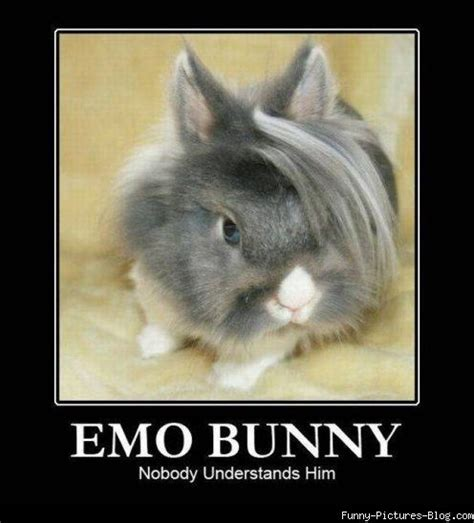 Bunny Meme - introducing the emo bunny meme funny pictures and lol hah pinterest bunny meme emo and
