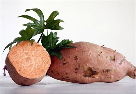 Ginseng Sweet Potato 6 Slips : Southern Exposure Seed ...