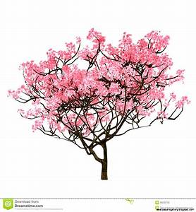 Cherry Blossom Tree Drawing Step By Step | Wallpapers Gallery