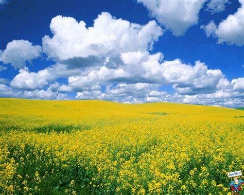 sfondi fioriti immagini prati fioriti 42 immagini in alta definizione hd