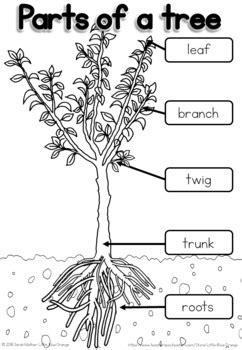 parts   tree worksheet   blue orange tpt
