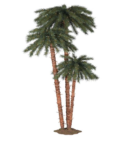Catalina Breeze Palm Trees Treetopia