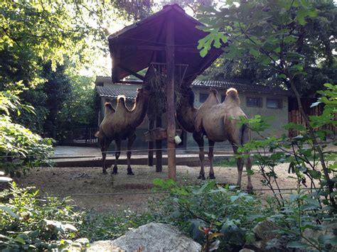 ingresso zoo di pistoia zoo di pistoia cammelli