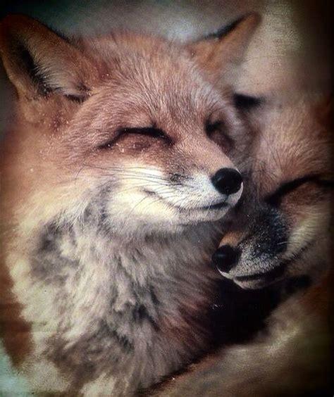 Fox love | Animals wild, Animals, Fox