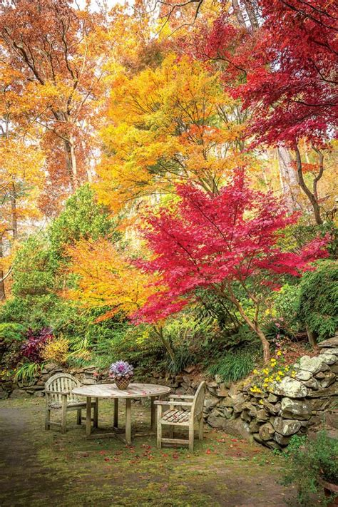 Beautiful Autumn Garden by Picture Carolina Garden It S Fall Y All