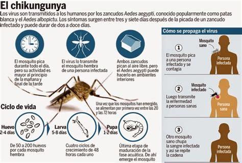 maqueta dengue pin el aedes aegyptis ciclo de vida app co
