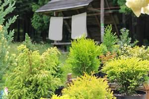 Kübel Bepflanzen Winterhart : zypresse im k bel winterhart oder schutzbed rftig ~ Michelbontemps.com Haus und Dekorationen