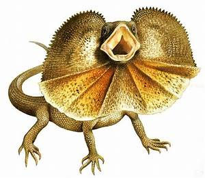frill necked lizard drawing - Google Search | Aussie 12 ...