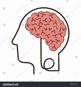 Silhouette Profile Human Head Brain Vector Stock Vector ...