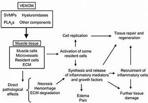 Fig   3   Schematic View Of The Pathogenesis Of Local