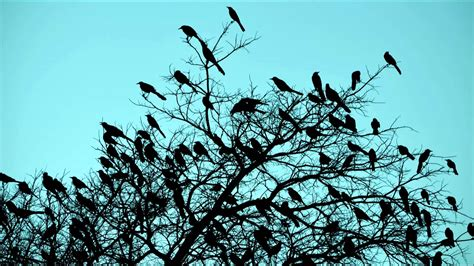 birds singing in the morning the relaxing sound of