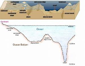 Features Of The Ocean Floor Diagram